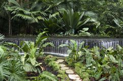 Singapore botaniska trädgårdar royaltyfri bild