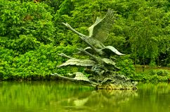 Singapore botaniska trädgårdar, svan sjö Arkivfoto
