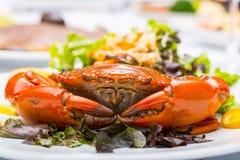 Singapore chili mud crab Stock Image