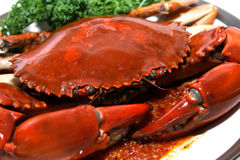 Singapore Chilli Mud Crab Royalty Free Stock Image