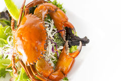 Singapore Chilli Mud Crab in dish Stock Images