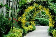 Singapore: De nationale Tuin van de Orchidee Royalty-vrije Stock Afbeeldingen