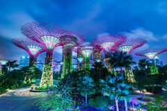 Singapore. DEC 31: Futuristic view of amazing illumination at Garden by the Bay on Dec 31, 2013 in . Night light show at Supertree Groveis is main Marina Bay Stock Photography