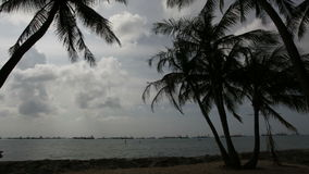 Singapore East Coast Beach with Palm and Coconut Trees Swaying in the Wind and Moving Clouds Time Lapse 1080p. Singapore East Coast Beach with Palm and Coconut stock video footage