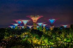 SINGAPORE, SINGAPORE - FEBRUARY 01, 2018: Beautiful outdoor view of futuristic tree of amazing illumination at Garden by Royalty Free Stock Image