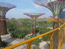 Singapore Gardens by the Bay Super-Trees. This picture is taken on a bridge. It gives a better view of the super-trees up close Stock Photos