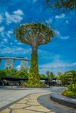 SINGAPORE, SINGAPORE - JANUARY 30, 2018: Unidentified people walking under a supertree at Gardens by the Bay. The tree. Like structures are fitted with Stock Image