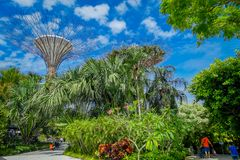 SINGAPORE, SINGAPORE - JANUARY 30, 2018: Unidentified people walking under a supertree at Gardens by the Bay. The tree. Like structures are fitted with Stock Images