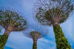 09 Singapore-JULI: Dagmening van het Supertrees-Bosje bij Tuinen Stock Fotografie