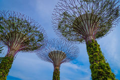 SINGAPORE-JULY, 09: Dnia widok Supertrees gaj przy ogródami Fotografia Stock