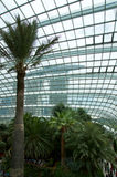SINGAPORE - JULY 23rd, 2016: Inside of the Flower Dome - Garden by the Bay Royalty Free Stock Photography