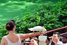 Singapore Jurong Birdpark. Tourists being entertained by the bird show at the Jurong Birdpark in Singapore Stock Photo