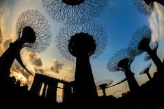 SINGAPORE - MAART 27: Nachtmening van Supertree-Bosje bij Tuinen B royalty-vrije stock afbeelding