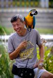 Singapore-23 MAR 2019:Man with parrots sitting on the shoulder in forest stock photography