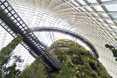 Cloud Forest Dome Stock Photography
