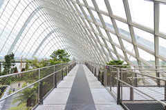 Cloud Forest Dome Stock Images