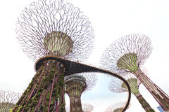 Gardens by the Bay Stock Photo