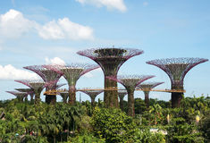 Singapore-March,2016.Gardens by the Bay in Marina Bay in Singapore,March 2016 Stock Photos
