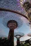Singapore - March,2016.Super Trees at sunset in Gardens by the Bay in Singapore,March 2016 Stock Photos