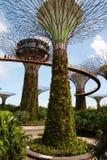 Singapore - marzo 2016 Giardini dalla baia a Singapore nel marzo 2016 Fotografie Stock Libere da Diritti