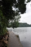 Singapore Mc Ritchy Reserve. Singapore lake pontoon in Mac Ritchy reserve Stock Photography