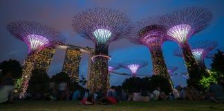 Singapore natthorisont på trädgårdar vid fjärden Royaltyfria Foton