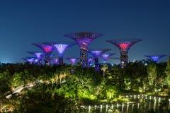 Singapore natthorisont på trädgårdar vid fjärden Arkivbilder