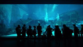 Silhouette of tourists in SEA Aquarium Singapore stock video footage