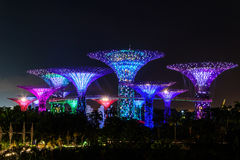 SINGAPORE - NOVEMBER 22, 2016: Supertrees at Gardens by the Bay. Royalty Free Stock Photography