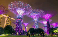 SINGAPORE - October 24, 2016: Colorful blooming of lights show a Stock Photo