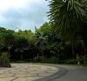 Singapore Park with trees and exotic flowers stock images