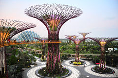Gardens by the Bay at dusk Stock Photos