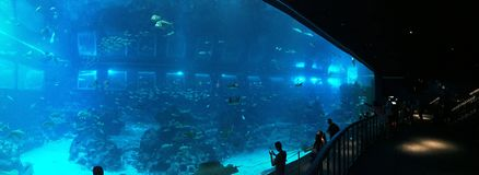 Singapore Sea Aquarium Royalty Free Stock Images