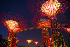 SINGAPORE-SEP 04 :Supertree树丛的夜视图庭院的由海湾 库存照片