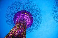 SINGAPORE-SEP 04: Nattsikt av den Supertree dungen på trädgårdar Royaltyfri Foto