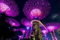 SINGAPORE - SEP 15, 2017 : Supertree Grove at Gardens by the Bay, Singapore. SINGAPORE - SEP 15, 2017 : Night view of Supertree Grove at Gardens by the Bay royalty free stock images