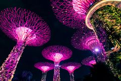 SINGAPORE - SEP 15, 2017 : Supertree Grove at Gardens by the Bay, Singapore. SINGAPORE - SEP 15, 2017 : Night view of Supertree Grove at Gardens by the Bay stock photo