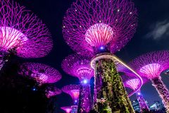 SINGAPORE - SEP 15, 2017 : Supertree Grove at Gardens by the Bay, Singapore. SINGAPORE - SEP 15, 2017 : Night view of Supertree Grove at Gardens by the Bay stock image