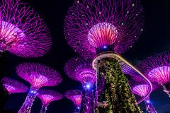 SINGAPORE - SEP 15, 2017 : Supertree Grove at Gardens by the Bay, Singapore. SINGAPORE - SEP 15, 2017 : Night view of Supertree Grove at Gardens by the Bay stock photography