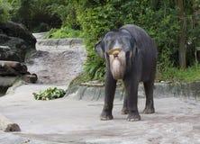 Singapore Showen med elefanterna Arkivbild