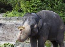 Singapore Showen med elefanterna Fotografering för Bildbyråer