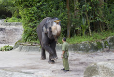 Singapore Showen med elefanterna Royaltyfria Foton