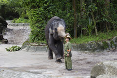 Singapore Showen med elefanterna Royaltyfri Fotografi