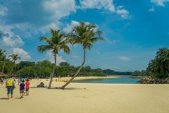 SINGAPORE, SINGAPORE - FEBRUARY 01, 2018: Unidentified people walking in the yellow sand with some palms tree in the. Beach of Sentosa island in Singapore royalty free stock image