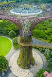 SINGAPORE, SINGAPORE - JANUARY 30, 2018: Above view of unidentified people walking in a walkway of supertree at Gardens Royalty Free Stock Photography