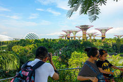 Singapore, Singapore - June 17, 2014: Tourists taking pictures of the supertrees in Gardens By The Bay. stock photo