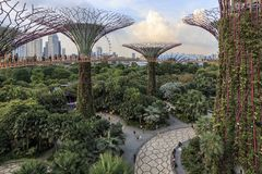 Tourists walking in the Supetree Grove area at the Gardens by the Bay in Singapore. Singapore, Singapore - October 16, 2018: Tourists walking in the Supetree stock photos