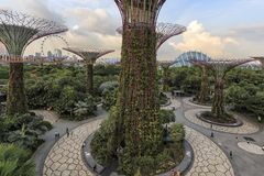 Tourists walking in the Supetree Grove area at the Gardens by the Bay in Singapore. Singapore, Singapore - October 16, 2018: Tourists walking in the Supetree royalty free stock photo