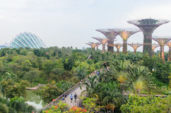 Singapore, Singapore - September 20, 2014: Bloemkoepel en Super Royalty-vrije Stock Foto