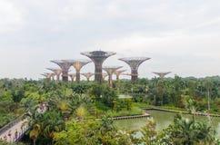 Singapore Singapore - September 20, 2014: Blomma kupolen och det toppna trädet på trädgården vid fjärden Royaltyfri Foto